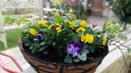 Create a spring hanging basket for your doorway or garden PICTURE: Ruth Goudy