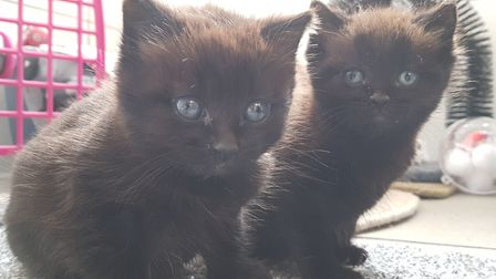Meet three-week-old kittens Ethel and Edward who were found up a tree in Ipswich. Picture: RACHE