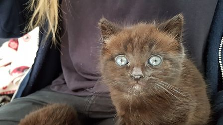 Meet three-week-old kittens Ethel and Edward who were found up a tree. Picture: RACHEL EDGE