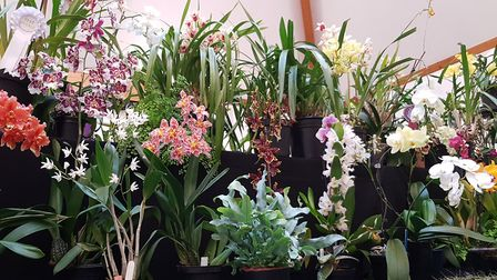 Suffolk Orchid Society. Picture: RACHEL EDGE