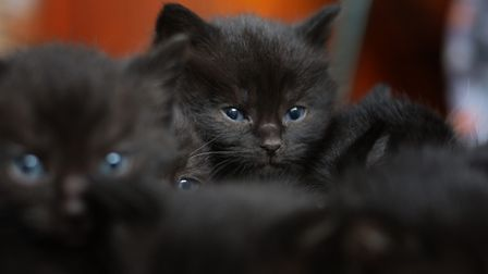 Pat Kettle has had an influx of kittens in the fast few weeks Picture: SARAH LUCY BROWN