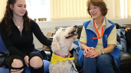 Therapy dog Jess specialises in helping people relax Picture: CHARLOTTE BOND