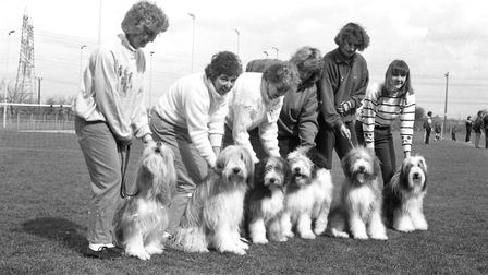 The collies and their owners who put on a show at the Whitton Sports Centre Picture: ARCHANT