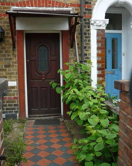 Japanese knotweed can grow through hard surfaces and can return if not removed properly. Picture: EN