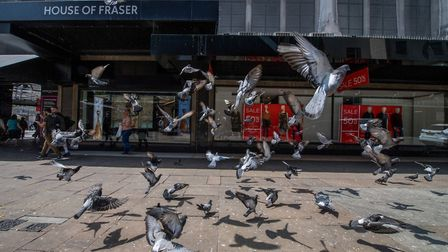 Pigeons fly in front of a House of Fraser store. Photographer: Chris J. Ratcliffe/Bloomberg via Gett