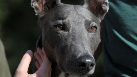 Blue, who has been at RSPCA for more than 700 days has finally be rehomed Picture: SARAH LUCY BROWN