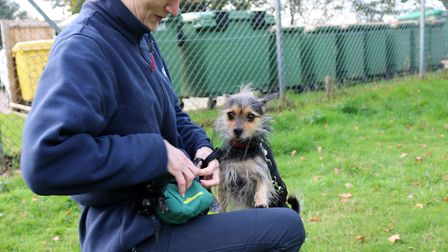 Harley the handsome chap is looking for his forever home Picture: CHARLOTTE BOND