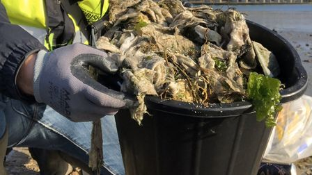 Wildlife Gadget Man Jason Alexander has collected a bucket full of wet wipes from under the Orwell B