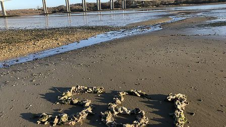 Jason Alexander collected whopping 561 wet wipes from the banks of the River Orwell on one December