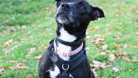 Beautiful Bella loves to have human company Picture: CHARLOTTE BOND