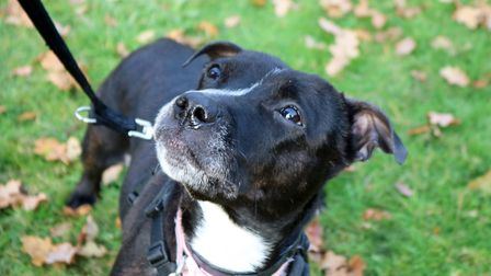 Bella came into the care of the RSPCA with an inspector due to welfare concerns, could you provide h