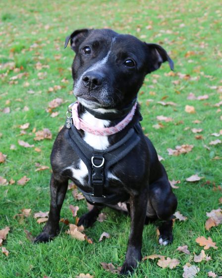 Beautiful Bella is looking for her happily ever after home Picture: CHARLOTTE BOND