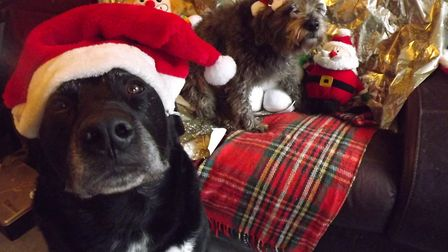 Bowza and Kaz are ready for Christmas Picture: DON COX