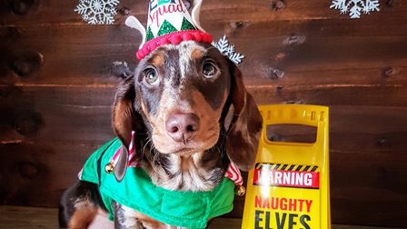 Santa Paws 2019 - Pablo - Picture: STACEY DAY