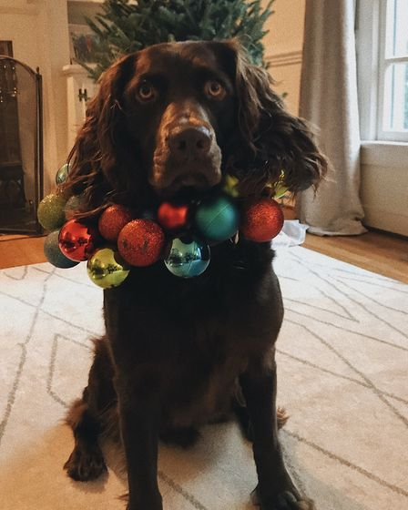 Santa Paws 2019 - Banks - Picture: JENNIFER QUARLES
