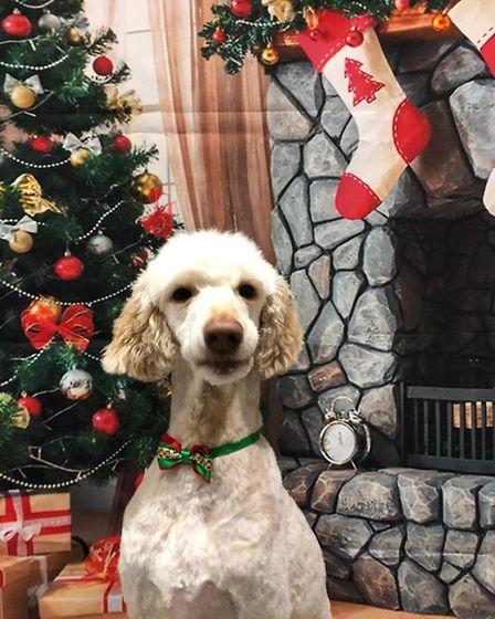 Santa Paws 2019 - Bella - Picture: SARA FINDLAY