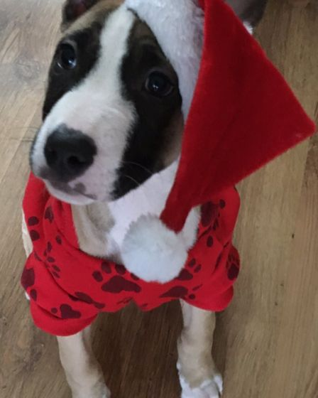 Santa Paws 2019 - Buddy - Picture: CHRISTINE MOORE