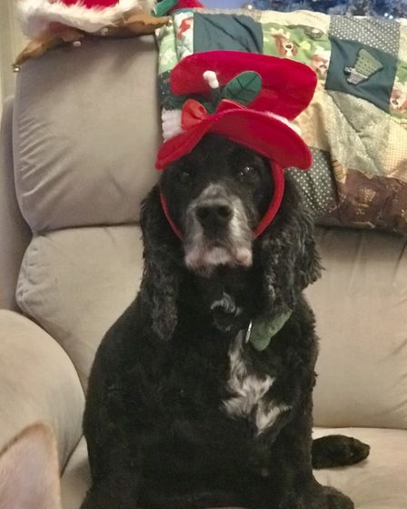 Santa Paws 2019 - Charlie - Picture: MICHELLE PARRY