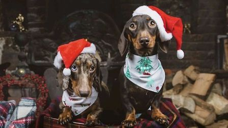 Santa Paws 2019 - Doodles and Doris - Picture: GEORGIA MAYNARD