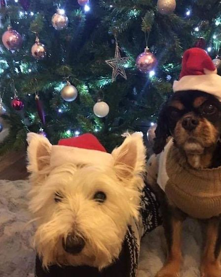 Santa Paws 2019 - Harry and Alfie - Picture: CHARLOTTE CROSLEY
