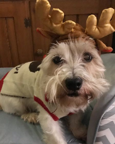 Santa Paws 2019 - Kevin and Nellie - Picture: HATTIE CLARKE