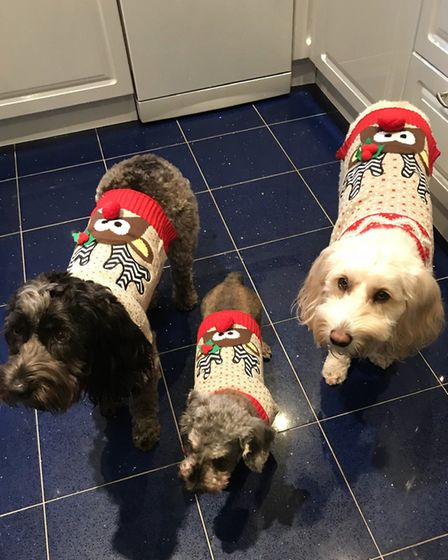 Santa Paws 2019 - Lucy, Lily, Indie - Picture: HAYLEY SAWYER