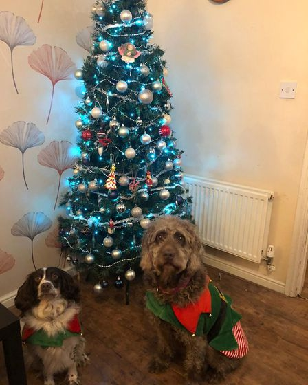 Santa Paws 2019 - Nellie and Mabel - Picture: ALI MARTYN