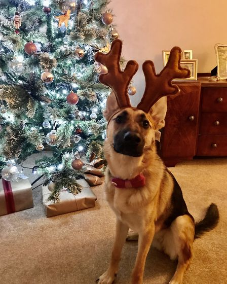 Santa Paws 2019 - Roxy - Picture: MICHELLE PARRY