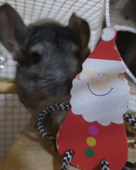 Santa Paws 2019 - Riley and Calypso - Picture: ALICE THEOBALD