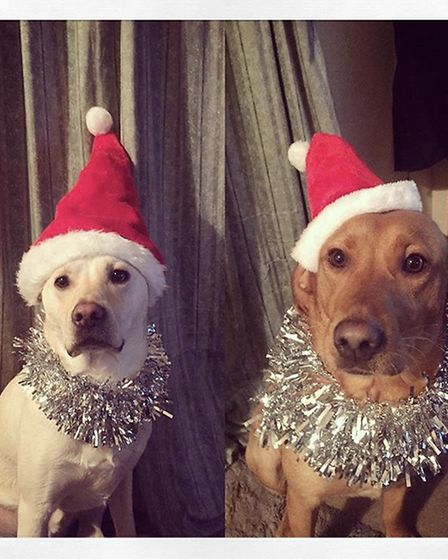 Santa Paws 2019 - Roary and April - Picture: FRAN RUSSELL