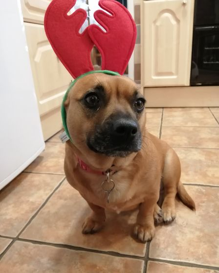 Santa Paws 2019 - Pippa and Darcy - Picture: SHANICE PILKINGTON