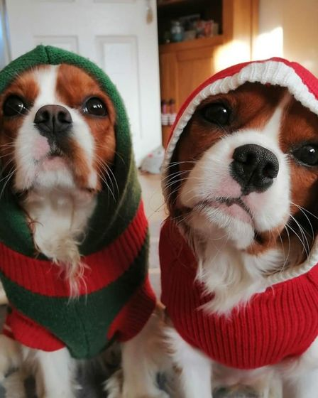 Santa Paws 2019 - Willow and Betty - Picture: CLAIRE PLAYER