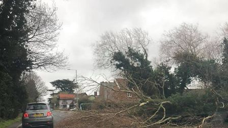 A tree blocking the Main Road in Kesgrave near Ipswich Picture: MEL GRIFFITHS