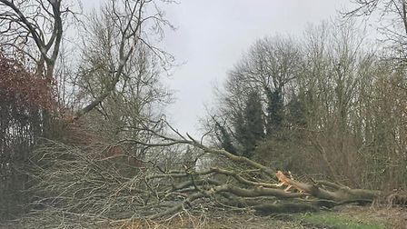 A tree blocking the road near Newmarket in Suffolk Picture: JENNA LOUISE GALLAGHER