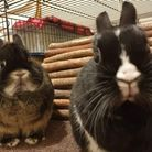 House-rabbits can be great 'tenants', if they have a diligent owner Picture: Katie Versey