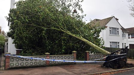 This was one lucky escape for householder Mildred Lockie when a tree fell in Beatrice Avenue, Felixs
