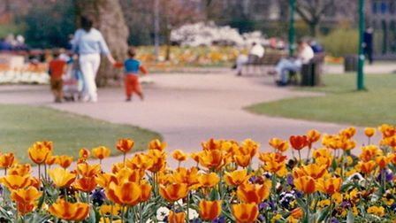 Dream about how you could improve your garden, with fresh ideas and plants Picture: Archant