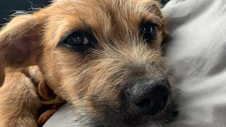 Four-month-old puppy Marvin is the first dog to be rehomed from Blue Cross Suffolk since the lockdow