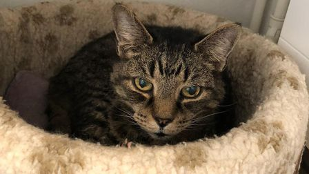 Blue Cross Suffolk are trying to rehome Henry, a 14-year-old deaf blind cat Picture: BLUE CROSS SUF