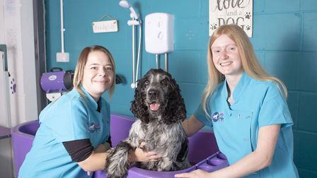 New groomers Colette Ann and Ellie Fenton giving Harry the dog a bath. Ipswich Dog Day Care Creche h