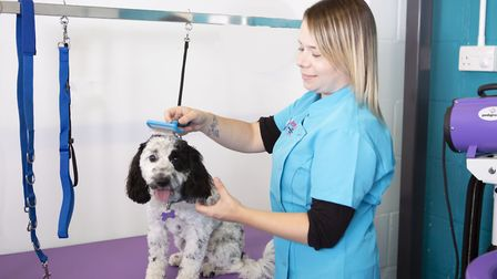 Colette Ann with Arnie the dog. Ipswich Dog Day Care Creche has opened Dolly�s Dog Grooming Salon. P