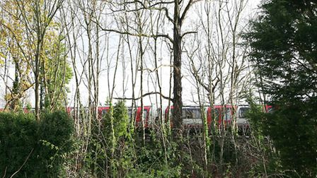 Trees lining the Central Line in Woodford Green could be for the chop