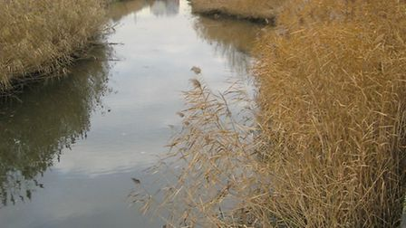 A section of the River Roding. Picture: Thames21