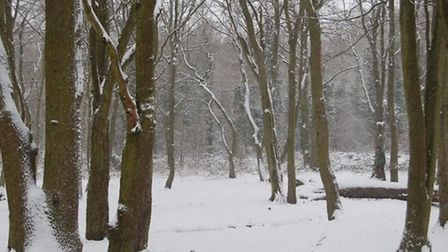 Hainault Forest covered in a blanket of snow. Picture: Danielle Irving