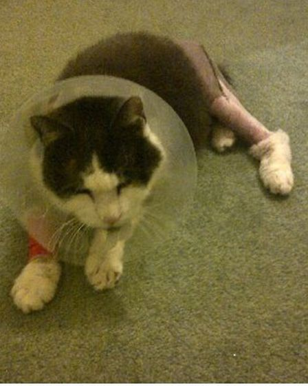 Mr Magoo displaying his broken leg after the attack.