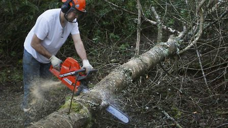 A man cutting a tree similar to the one that may have fallen. Picture PA/ Danny Lawson