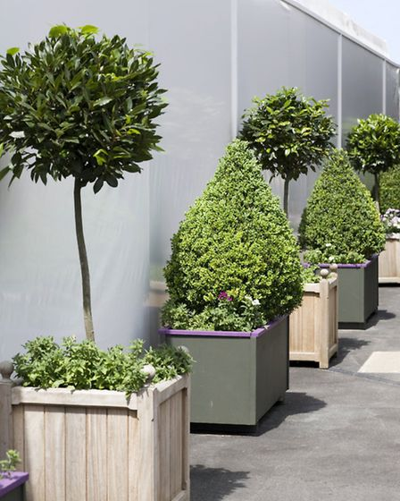 Topiary adds structure to a garden. Picture credit: PA Photo/thinkstockphotos.