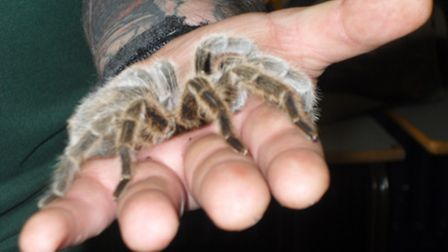 Students got up close and personal to a giant tarantula during National Science and Engineering week