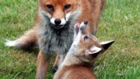 Norfolk House tenants have been accused of letting foxes 'roam' the block (photo: Martin Keene/PA)
