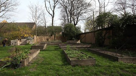 The allotment at St Luke's Business Centre.